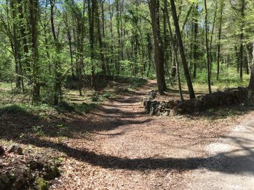 Excursión para conocer un volcán: senderismo por Cataluña