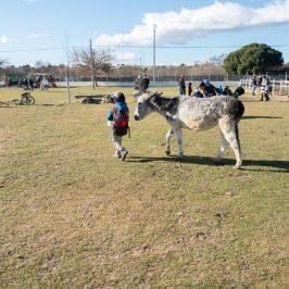 Burrolandia: un día entre burros